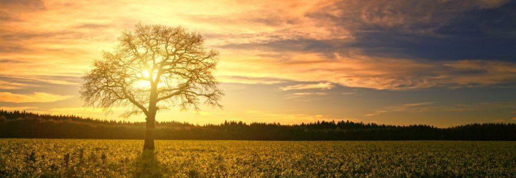Slunce taktující biologický rytmus